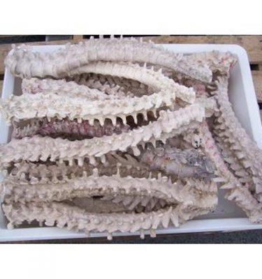 Bones Assort Spines