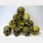 Resin Human Skulls More Than 500