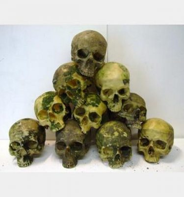 Resin Human Skulls More Than 500