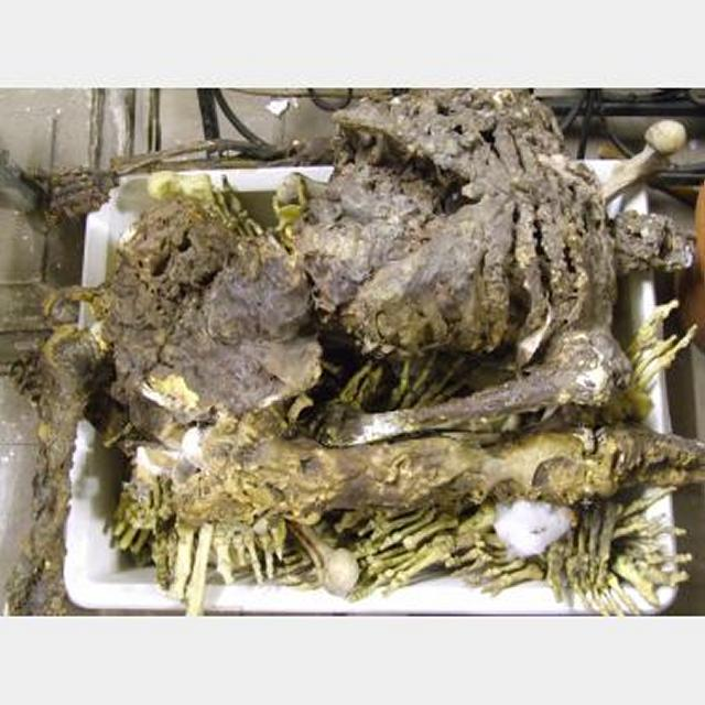 Rotting Plastic Resin Corpse Bones