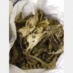 Animal Bones Assorted