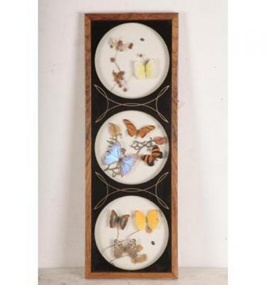 Framed Picture Butterfies