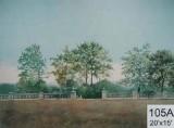 Backdrop 105A Summer Parkland 20'X15'