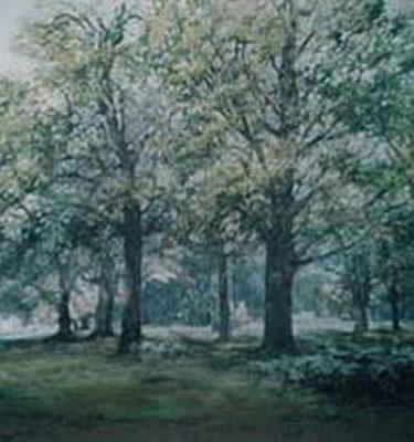 Backdrop 395 Summer Trees 25'X15'