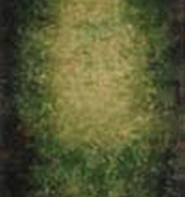 Backdrop 655 Green Grey Brown Yellow 6'X12'