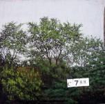 Backdrop C788 12' X14'