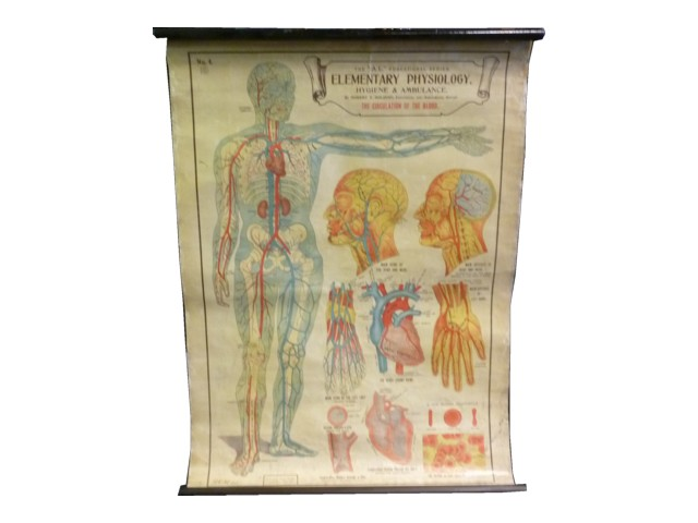New Medical Posters to add to Stockyard's collection!