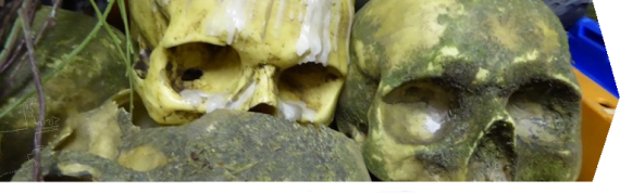 Slider - Skulls